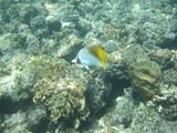 珊瑚礁と魚